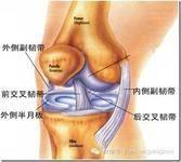 膝盖韧带损伤严重吗-前叉之家
