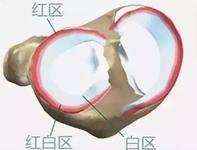 谁看谁想赞!半月板再生手术,日本已开始临床实验-前叉之家